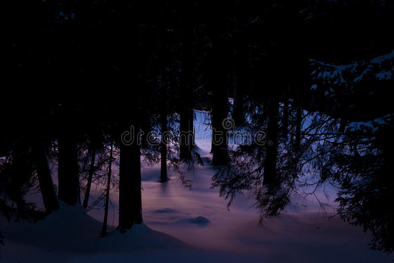 lasowa tajemnicza zima zdjęcia stock
