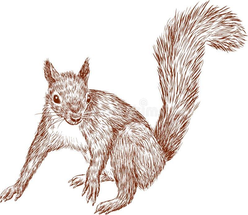 Lasowa wiewiórka ilustracja wektor
