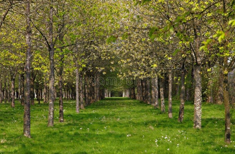 Download Lasowa wiosna zdjęcie stock. Obraz złożonej z kwiaty - 19347738