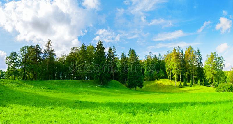 Lasowa wiosna krajobrazu panorama - zwarci lasowi drzewa w dolinie w pogodnej pogodzie zdjęcia stock