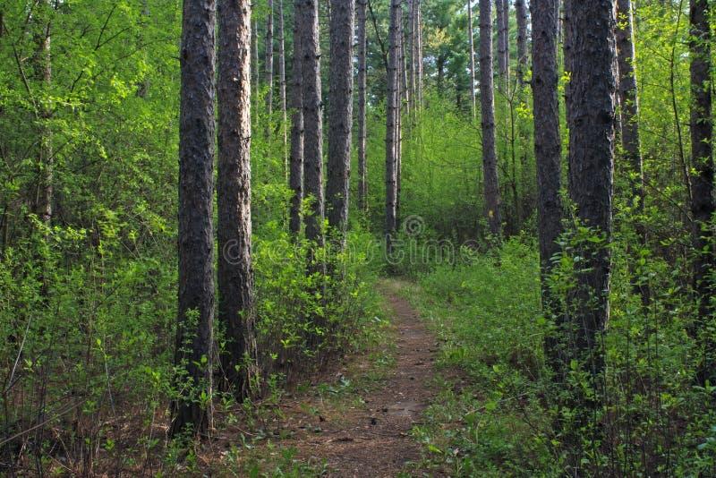 lasowa wiosna Wisconsin obrazy royalty free