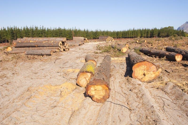 lasowa wyróbka zdjęcie royalty free
