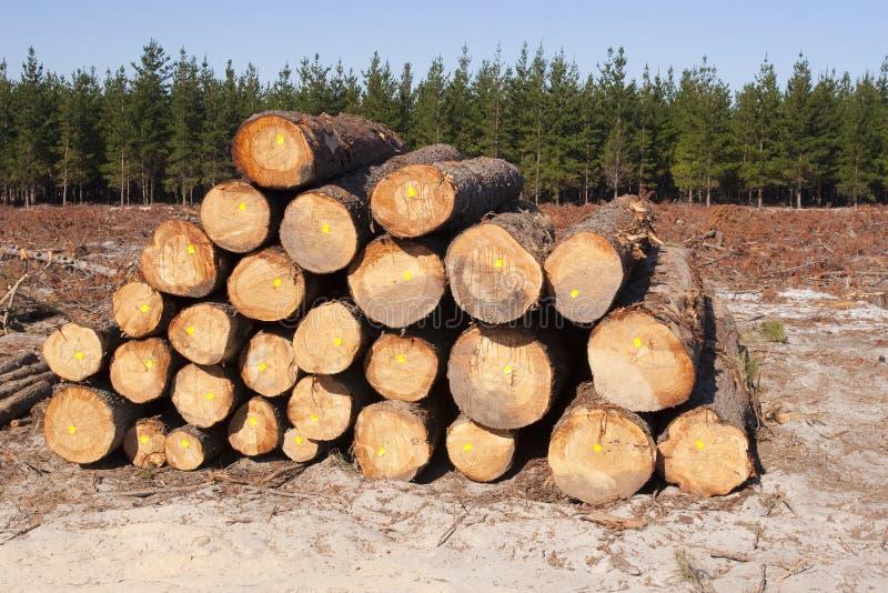 lasowa wyróbka fotografia stock