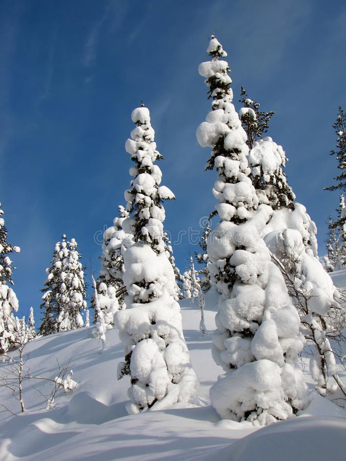 Download Lasowa zima zdjęcie stock. Obraz złożonej z idylliczny - 13331886