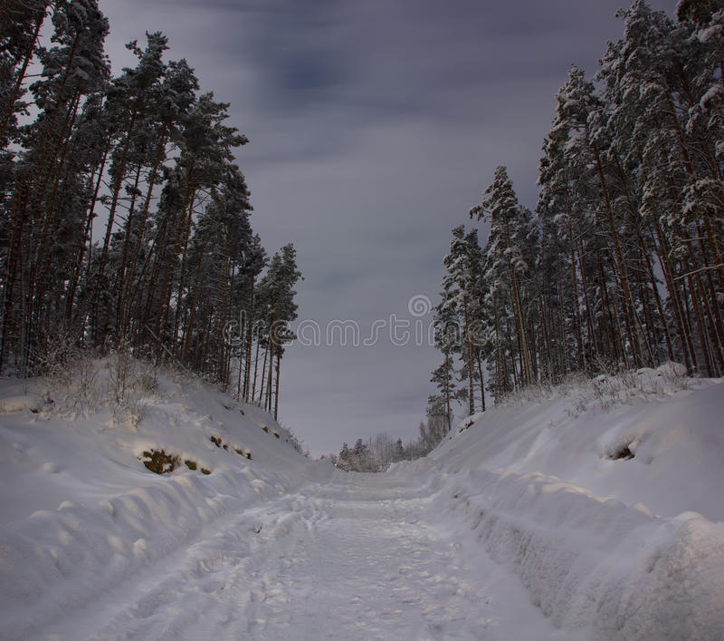 Lasowa zimy droga zdjęcia stock