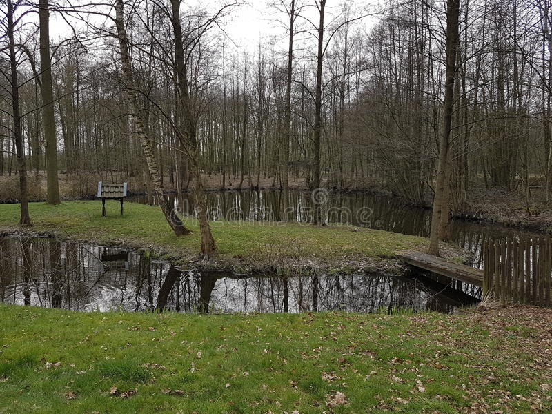 Lasowa zwierzę natura zdjęcia royalty free