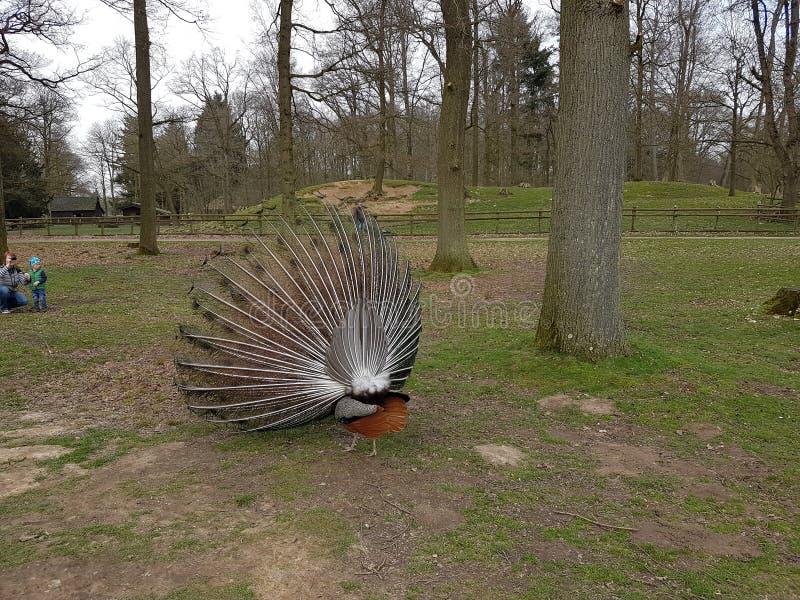 Lasowa zwierzę natura zdjęcie stock