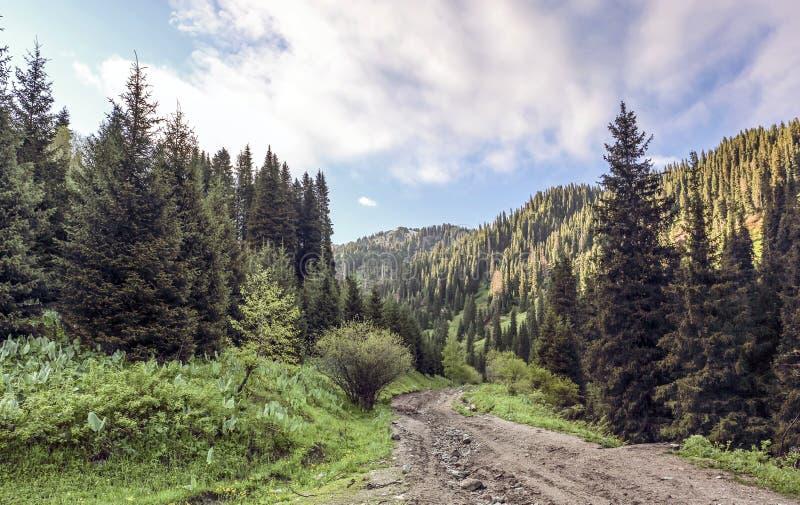 Lasowe góry zdjęcia royalty free