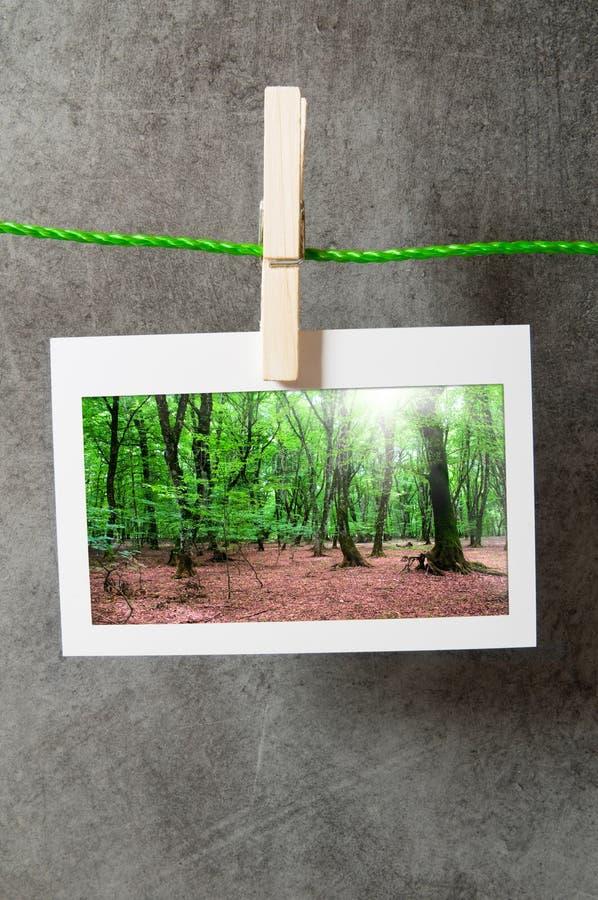 lasowe ramy obrazy royalty free