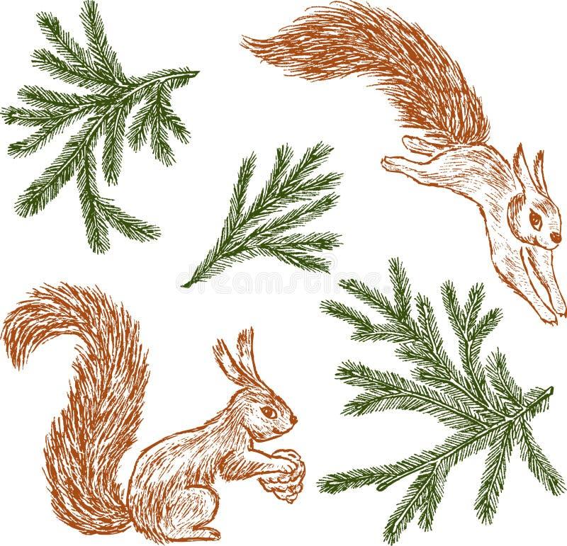 Lasowe wiewiórki i jodeł gałąź ilustracji
