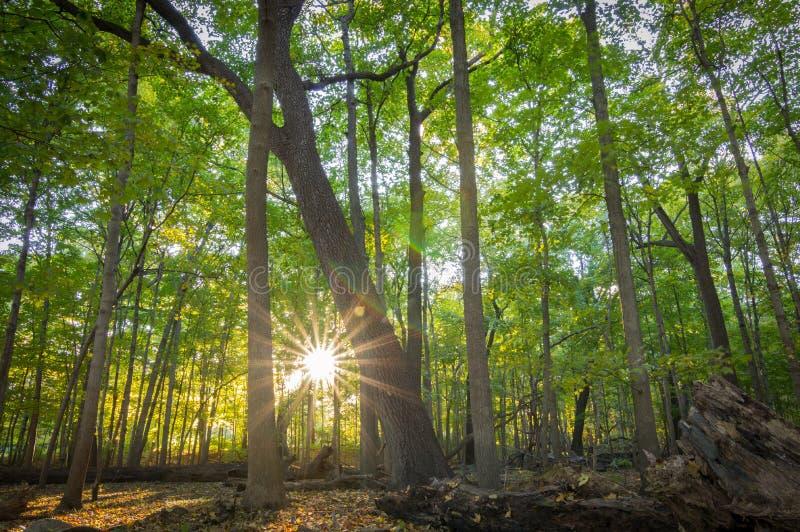 Lasowego wschód słońca Drzewny ulistnienie Północny Illinois fotografia stock