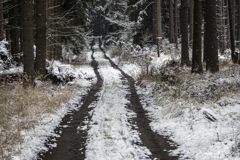 Lasowej ścieżki usadowić w śniegu zdjęcie royalty free