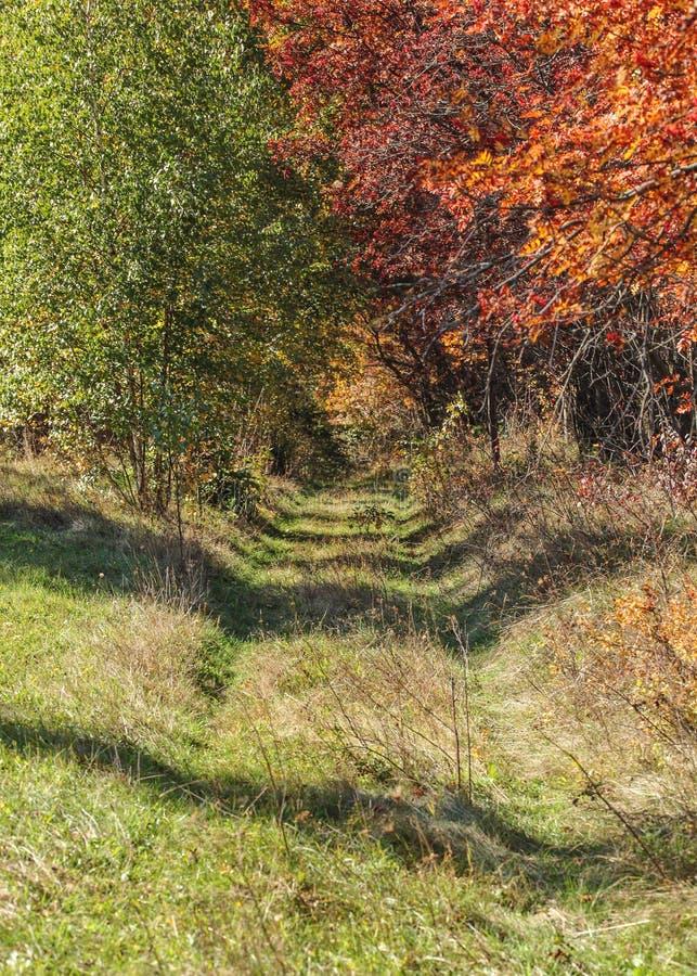 Lasowej drogi aleja w jesieni, zieleni drzewa na jeden stronie, czerwień inny obrazy royalty free