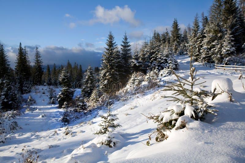 lasowej drogi zima zdjęcie royalty free