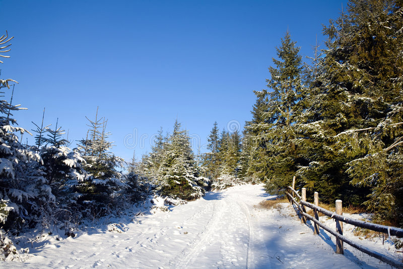 lasowej drogi zima obraz royalty free