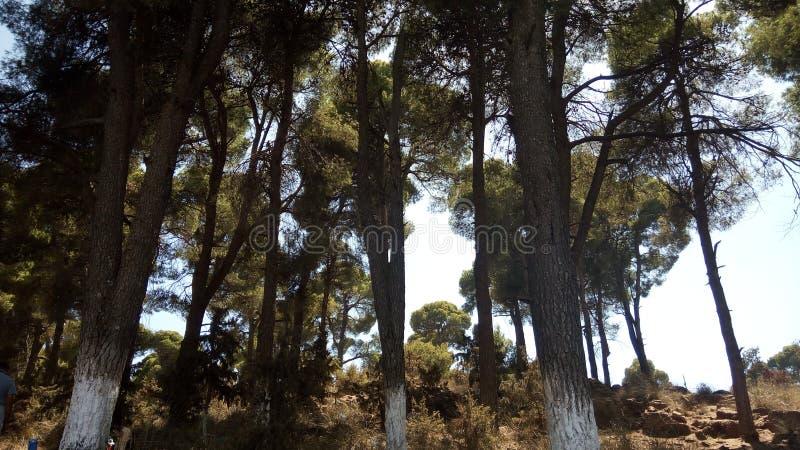 Lasowej zieleni drzewa obrazy stock
