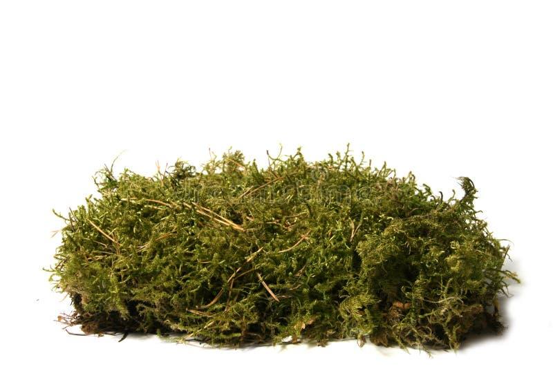 lasowej zieleni mech fotografia royalty free