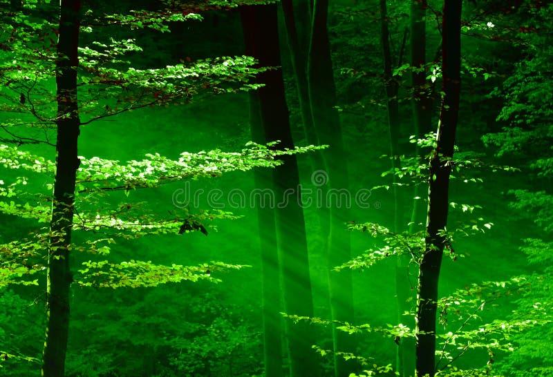 lasowi światła obraz royalty free