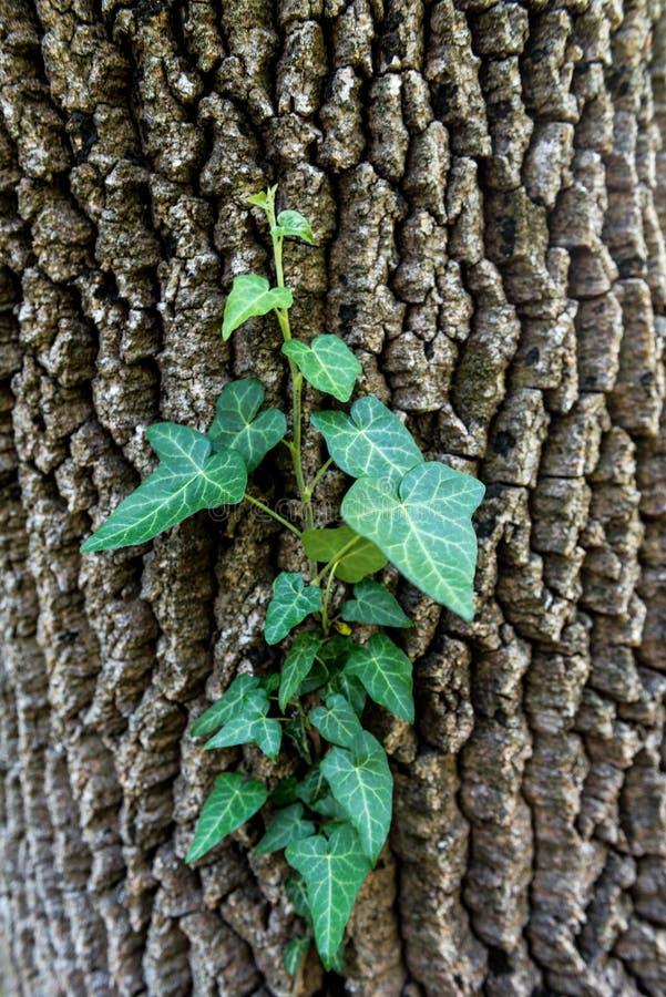 Lasowi drzewa z zieloną rośliną na ciele zdjęcie stock