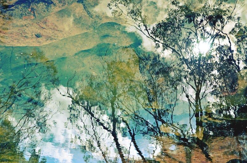 Lasowi nieb odbicia obraz royalty free