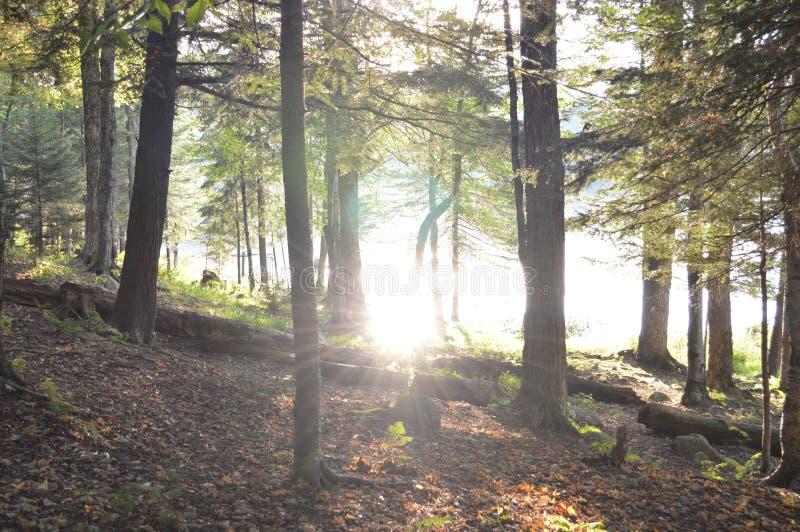 Lasowi odbicia obraz stock