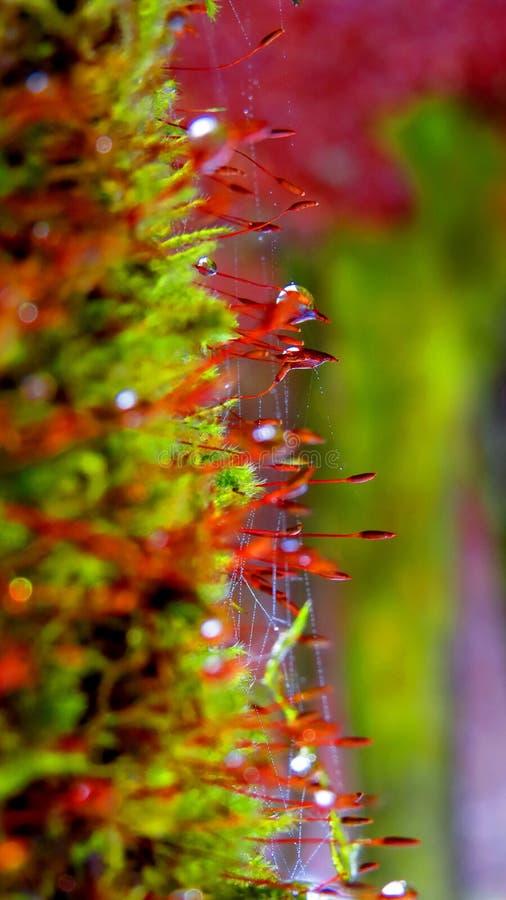 Lasowi raindrops zdjęcie stock