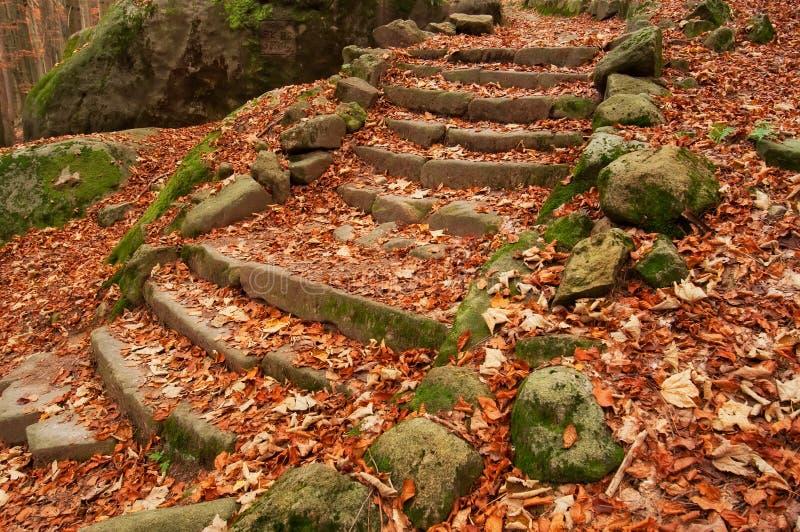 lasowi starzy kroki zdjęcie stock