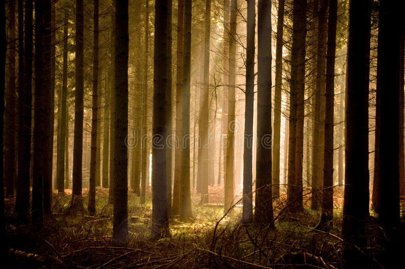 lasowi sunbeams grżą fotografia royalty free