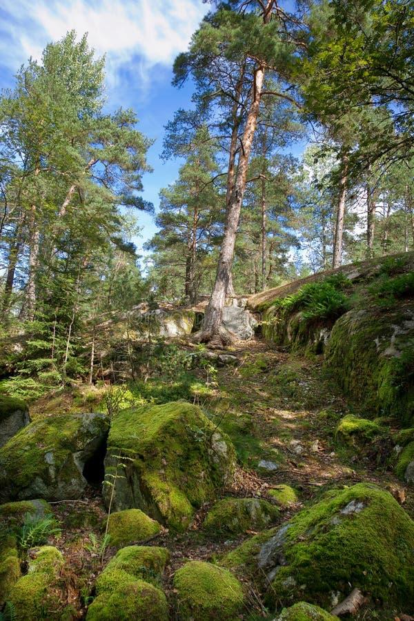 lasowi szwedzi zdjęcia royalty free