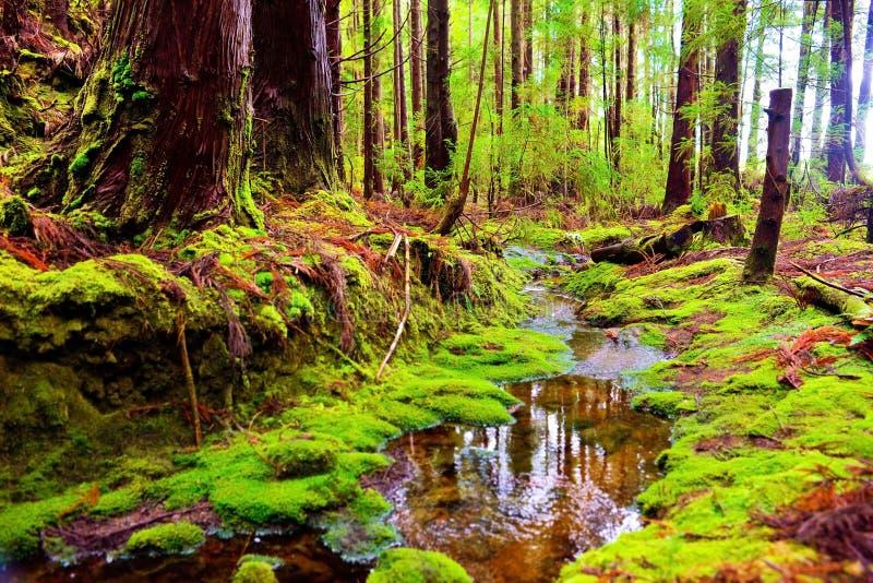 Lasowi Zaczarowani, jesień kolory, Piękne tekstury i wzory, natury tło zdjęcie stock