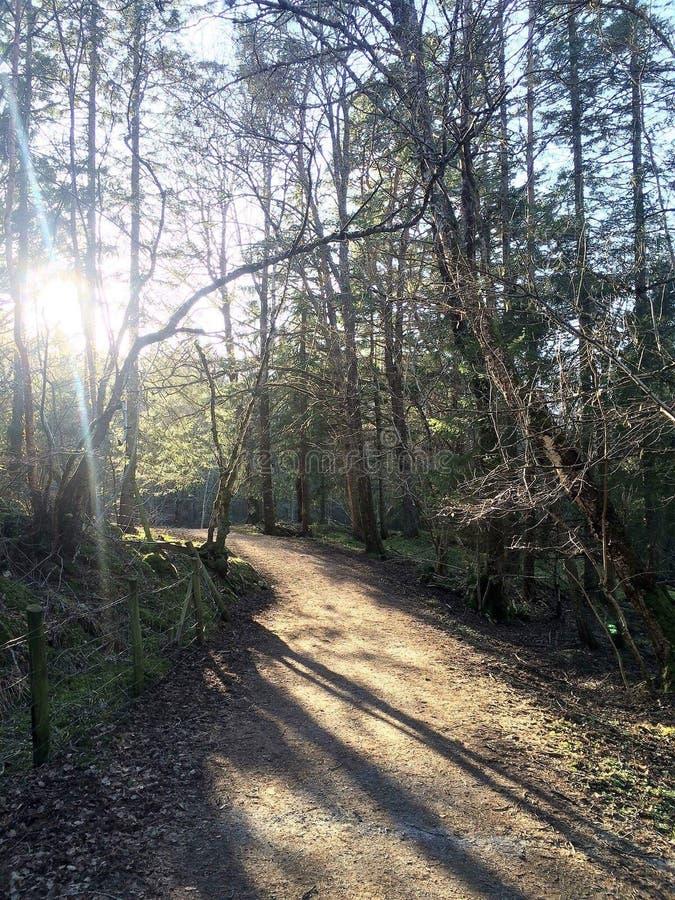 Lasowy 🌠³ zdjęcia royalty free