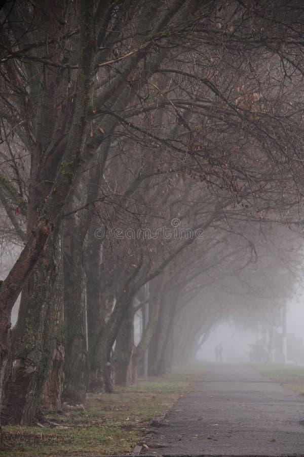 Lasowy ślad wśród bukowych drzew na mgłowym, dżdżystym jesień dniu, obraz stock