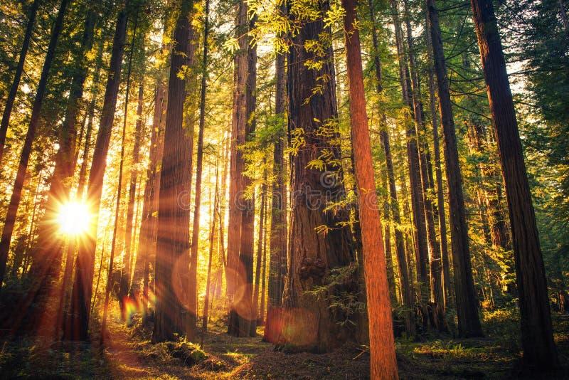 Lasowy śladu zmierzch fotografia royalty free