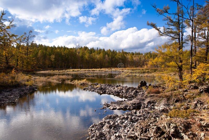 lasowy bagna fotografia stock