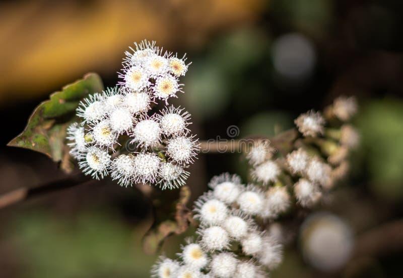 Lasowy biały kwiat z zamazanym tłem obrazy royalty free