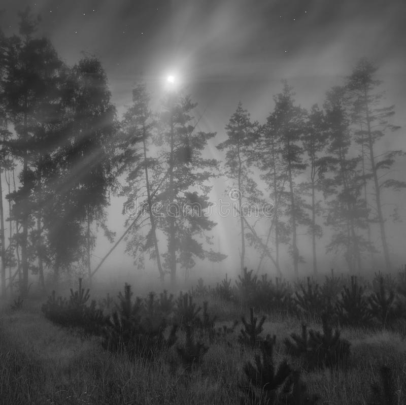 lasowy blask księżyca obraz stock