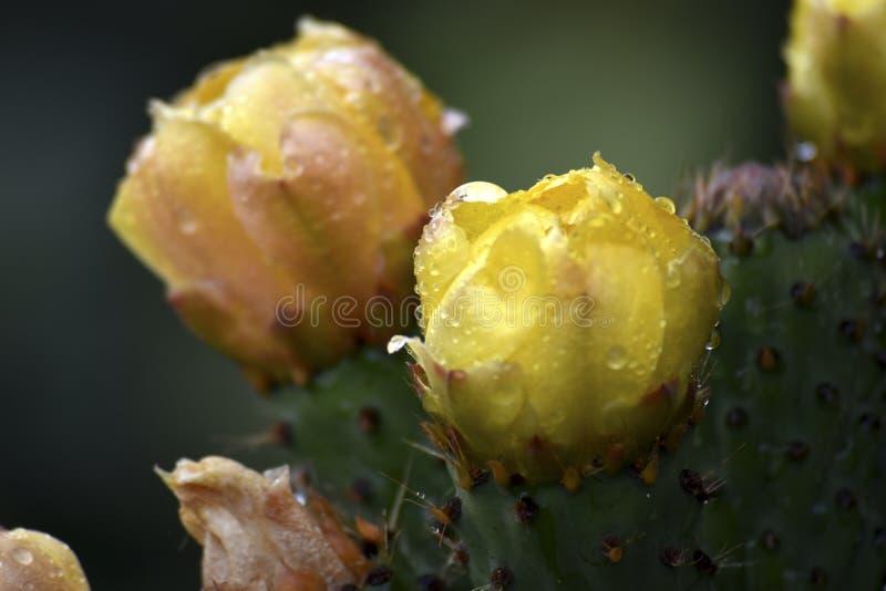 Lasowy dziki kwiat obrazy royalty free