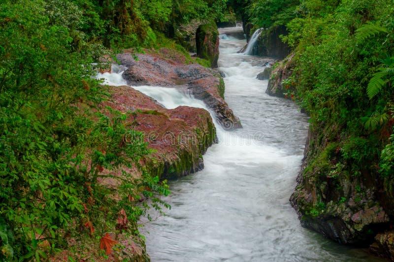 Lasowy dziki rzeka krajobraz w Amazon regionie, gwałtowni leje się wodę zdjęcia royalty free