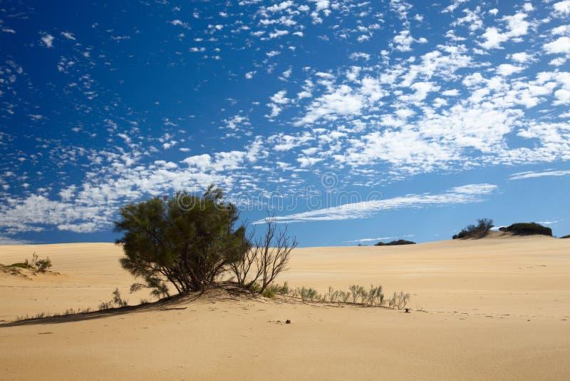 lasowy globalny nagrzanie zdjęcie stock