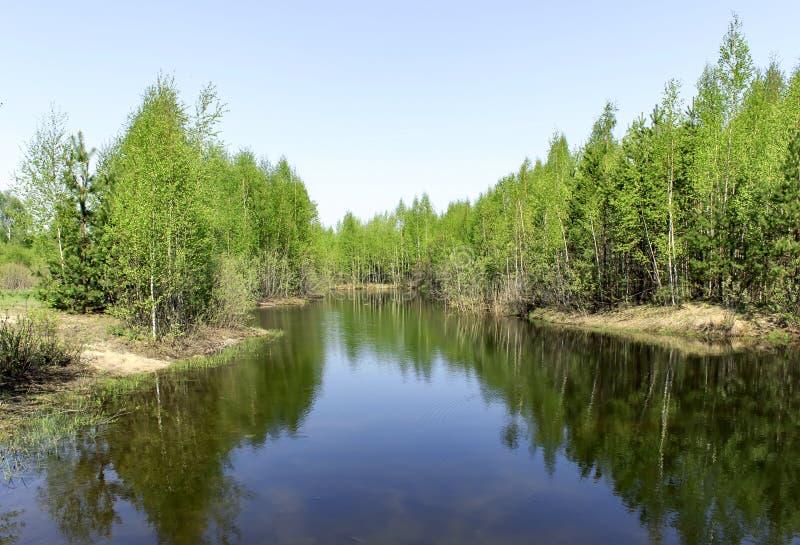 Lasowy jeziorny brzeg krajobraz w słonecznym dniu Lato brzeg lasowa jeziorna panorama Lasowy jeziorny brzeg widok zdjęcia royalty free