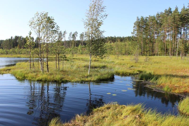 Lasowy jezioro zdjęcia stock