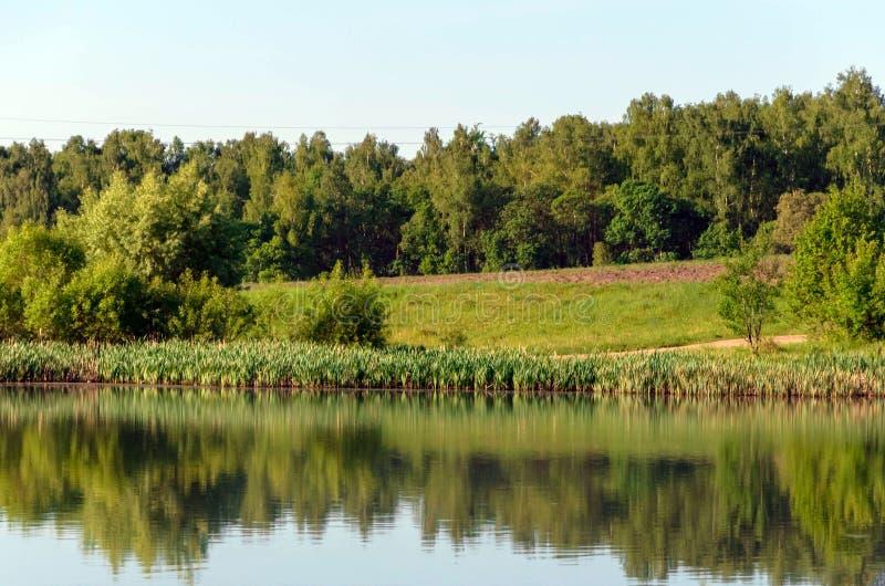 Lasowy jezioro w lato widoku, krajobraz fotografia stock