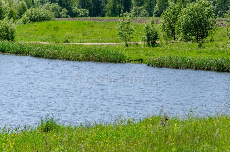 Lasowy jezioro w lato widoku, krajobraz obraz royalty free