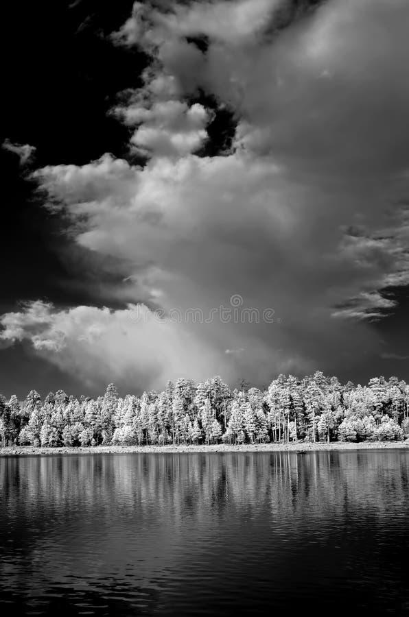 Lasowy jezioro w monochromatycznym infrared zdjęcie stock
