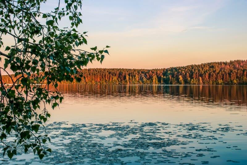 Lasowy jezioro w złotej godzinie Piękny Wschodni - europejczyka krajobraz zdjęcia royalty free