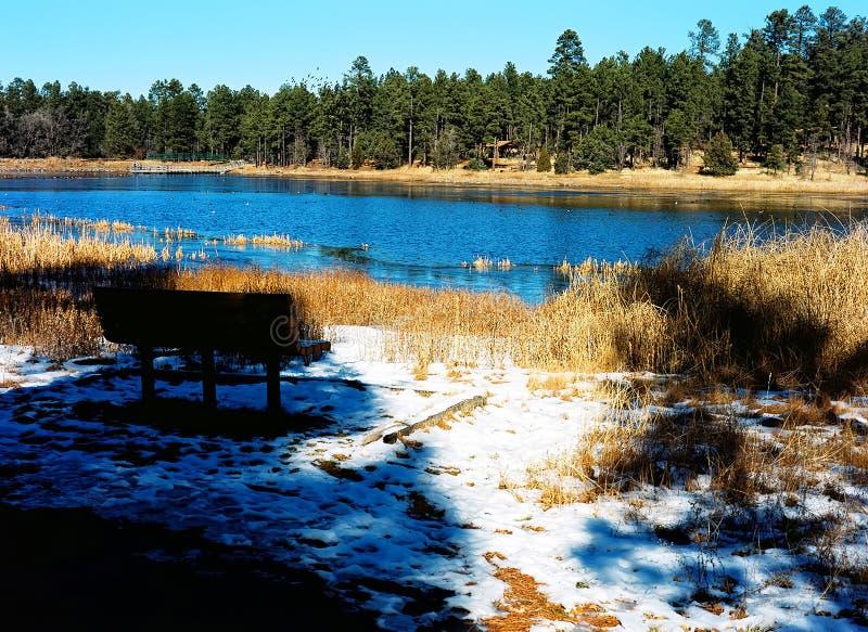 Lasowy jezioro w zimie zdjęcie royalty free