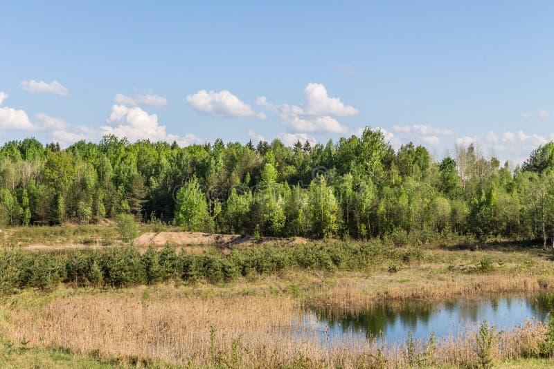 Lasowy jezioro, zieleni drzewa, suche płochy fotografia stock