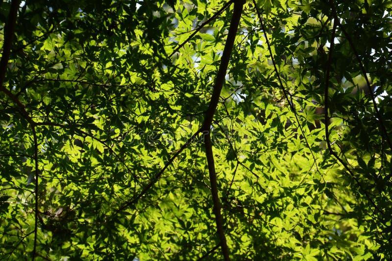 Lasowy kąpanie, świeży zieleń park/ zdjęcie royalty free