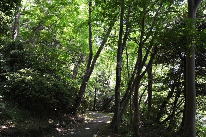 Lasowy kąpanie, świeży zieleń park/ fotografia royalty free