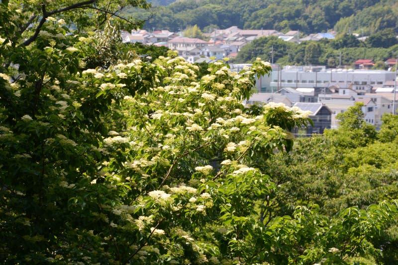 Lasowy kąpanie, świeży zieleń park/ zdjęcia royalty free